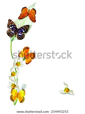 branch of flowers and butterflies isolated on a white background - stock photo