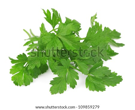 Branch of fragrant fresh parsley on a white background