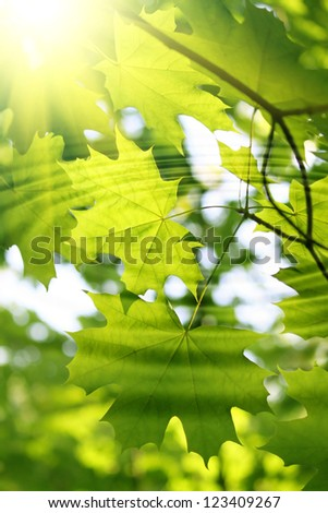 Branch of fresh green maple and sunlight with water ripples