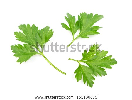 Branch of fresh parsley  - stock photo