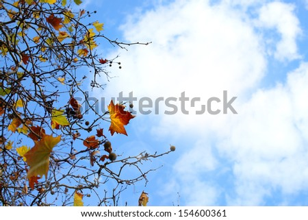 Branch of fresh yellow maple against the blue sky