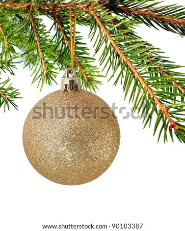 Branch of fur-tree isolated for background - stock photo