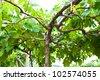 Branch of grape vine - stock photo
