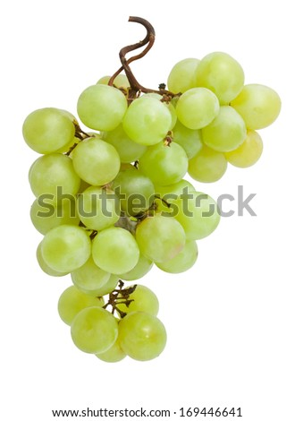 Branch of grapes isolated on white background - stock photo