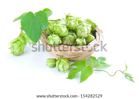 Branch of hop is with cones and sheets (Humulus lupulus) are in a little basket on a white background