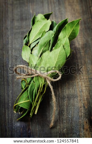 branch of laurel bay leaves on a wooden board - stock photo