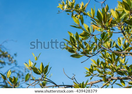 Branch of mangrove on the blue sky. Selective Focus. Suitable for use as wallpapers. - stock photo