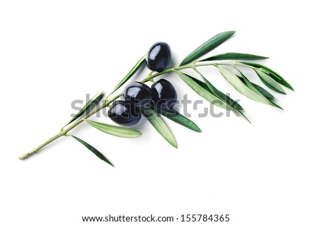branch of olive tree with olives isolated - stock photo