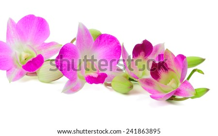Branch of orchid flowers on a white background - stock photo
