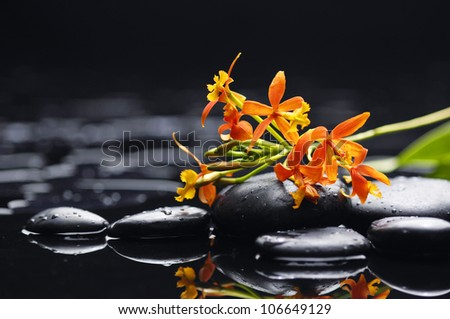 branch of orchid on pebbles - stock photo