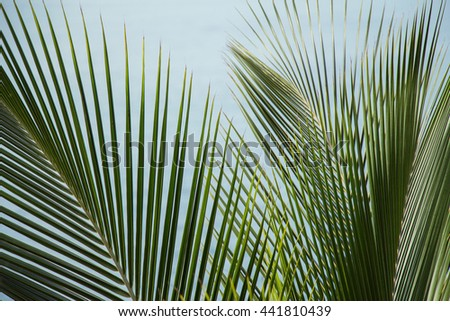 branch of palms and blue sky
