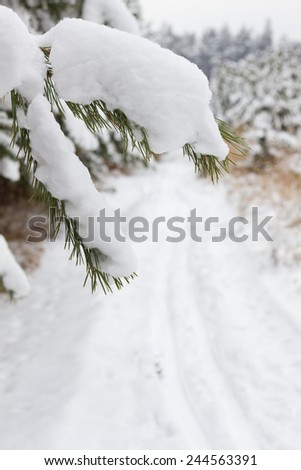 Branch of Pine tree covered snow and cross country path - stock photo
