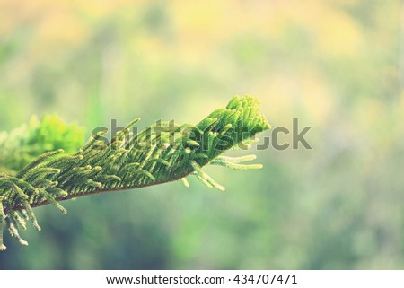 Branch of pine tree with nature background (Vintage Style)