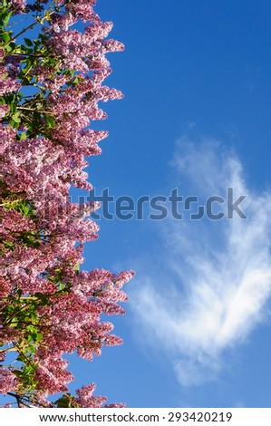 Branch of pink blooming lilacs on the background of blue sky with copyspace - stock photo
