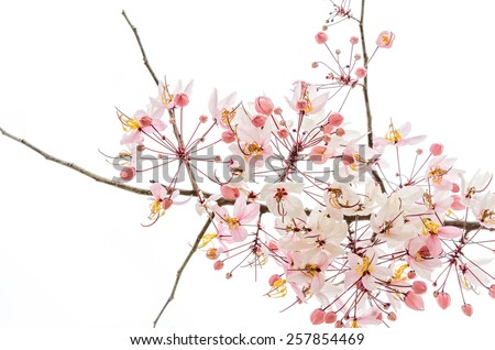 Branch of pink flower isolated on white background
