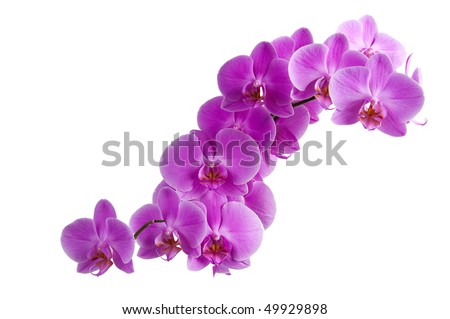 branch of purple orchids - stock photo
