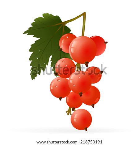 Branch of red currant and green leaf on a white background . Vector illustration. - stock photo