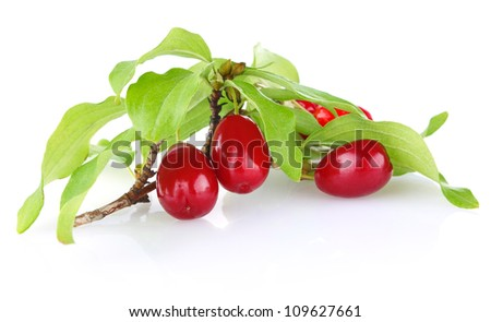 branch  of ripe cornelian cherry with leaves isolated on white background - stock photo