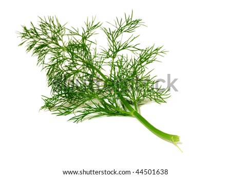 branch of  ripe dill isolated on white background - stock photo
