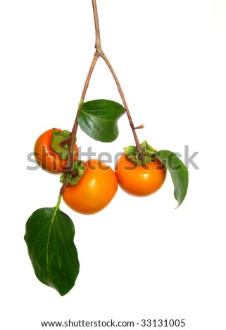 Branch of ripe persimmons - stock photo