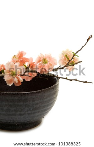 branch of Spring flowering quince in bowl - stock photo