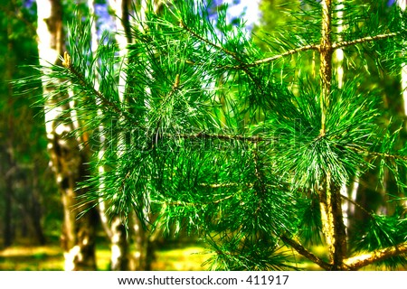 branch of  spruce - stock photo