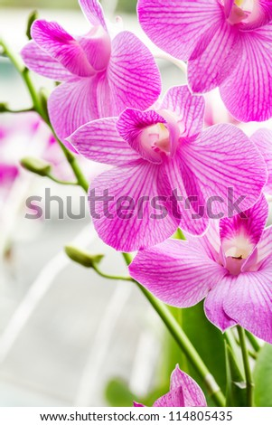 branch of strip purple orchid
