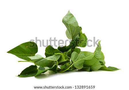 branch of sweet potato leaves Belacan Yam Leaf - stock photo