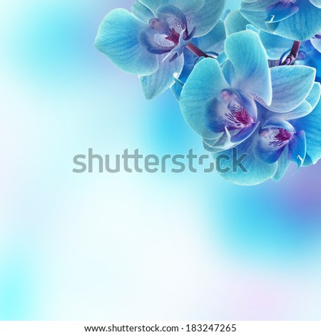 Branch of the blue orchid on beauty background - stock photo