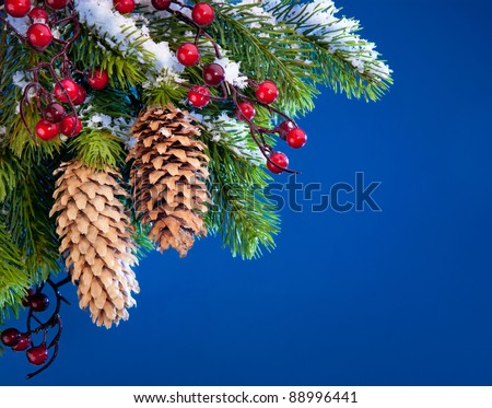 branch of the Christmas tree sheltered snow  on blue background