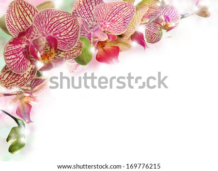 branch of tiger orchid as floral background for Valentines Day - stock photo