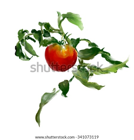 Branch of tomato. Digital watercolor illustration, a branch of tomato with the leaves over white background.