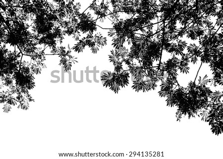 Branch of tree Black and white - stock photo