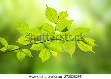 Branch of tree on blured green background - stock photo
