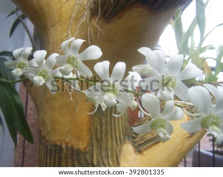 Branch of white orchids - blur - stock photo