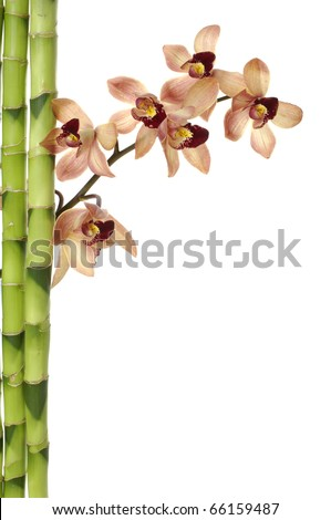 branch orchid flower and green bamboo sticks on white background - stock photo