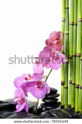 branch orchid on pebble and bamboo thin grove - stock photo