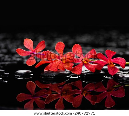Branch orchid with bamboo leaf therapy stones - stock photo