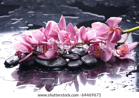 Branch pink orchid and black stones with reflection - stock photo
