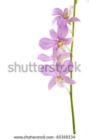 branch pink orchid isolated - stock photo