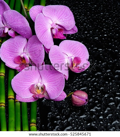 Branch pink orchid on bamboo grove â??wet background