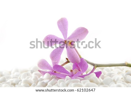branch pink orchid on white pebble - stock photo