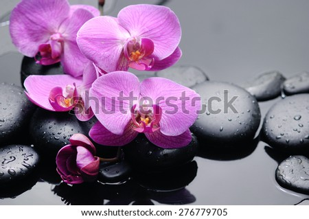 branch pink orchid with therapy stones