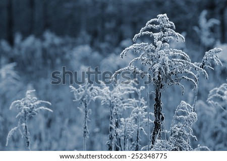 Branch plants with frost. Natural winter background. - stock photo
