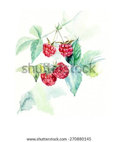 Branch raspberry. Forest miniatures. Watercolor hand drawn illustration - stock photo