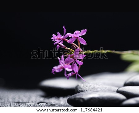 Branch red orchid flower and stone with water drops - stock photo