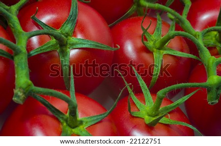 Branch red tomato, isolated on white background