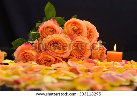 Branch Rose with many rose petals with candle-black background  - stock photo