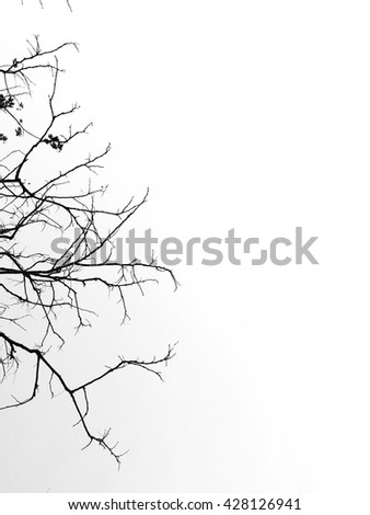 branch silhouette background texture wallpaper