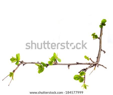Branch. Spring. - stock photo